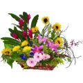 A huge garden basket with Stargazers, Sun Flowers, Gerberas, Orchids & Ginger Flowers